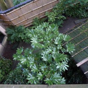 Japanse tuin van Shofukan
