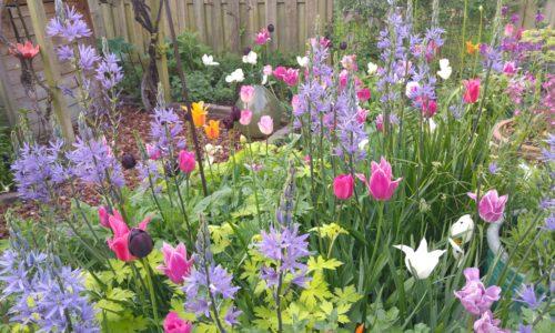 Kathryn's Garden