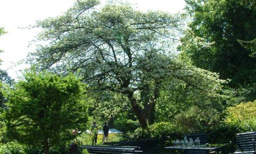 Botanische tuin Kralingen