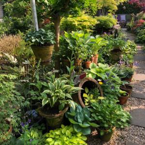 Vaste plantenweelde